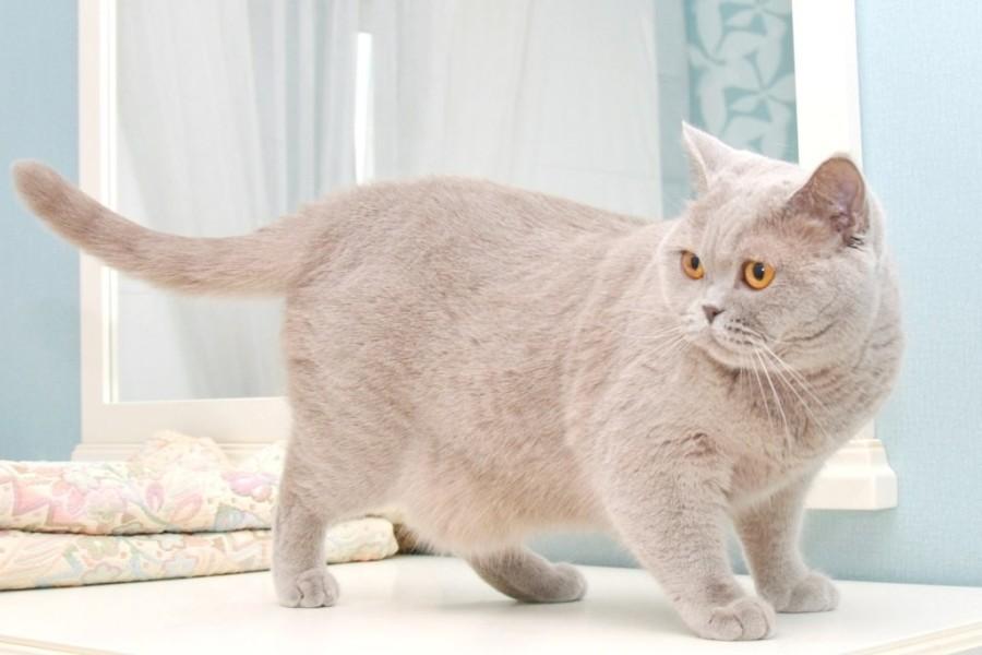 для фото серые большие коты точка является